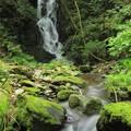 Photos: 367 陰作沢の滝
