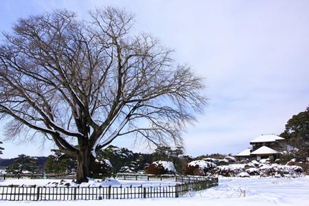 左近の桜 雪景色 偕楽園