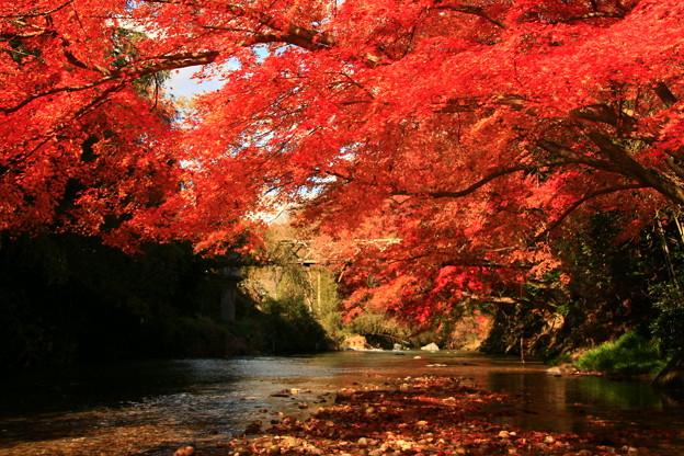 Photos: 561 里川の紅葉