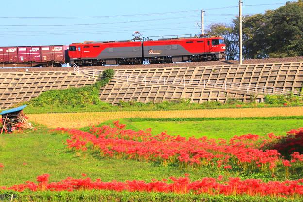 254 小木津の田園風景