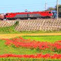 247 小木津の田園風景