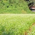 砂沢の蕎麦畑