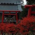 579 稲荷山の稲荷神社 会瀬鹿嶋神社
