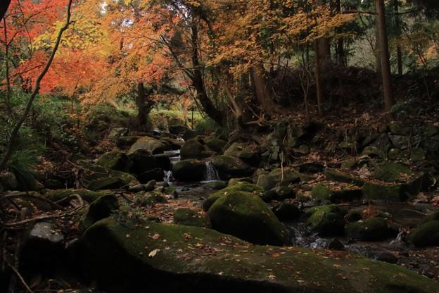 Photos: 489 滝沢川
