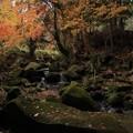 Photos: 583 滝沢川