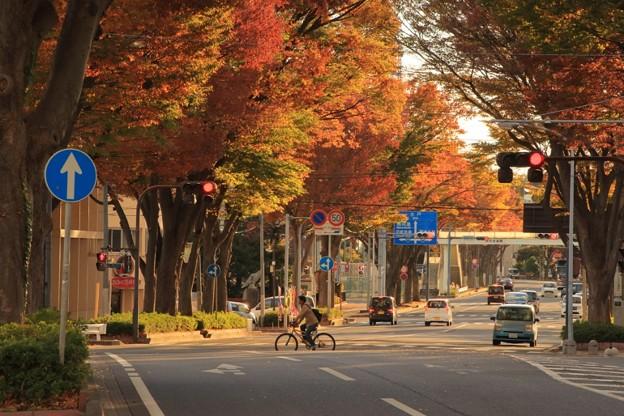 Photos: 644 けやき通り 日立市