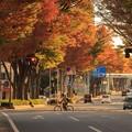 Photos: 537 けやき通り 日立市