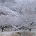 雪の諏訪梅林