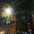 Photos: 831 日立の黄金伝説 伊勢神社