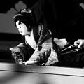 Photos: 真壁白井座の人形浄瑠璃