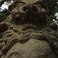 396 山神社の狛犬