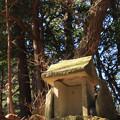 Photos: 290 田尻富士