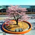 Photos: 008 大煙突 円形ベンチ 日立駅前