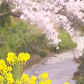 Photos: 783 桜川 日立市・桜川緑地