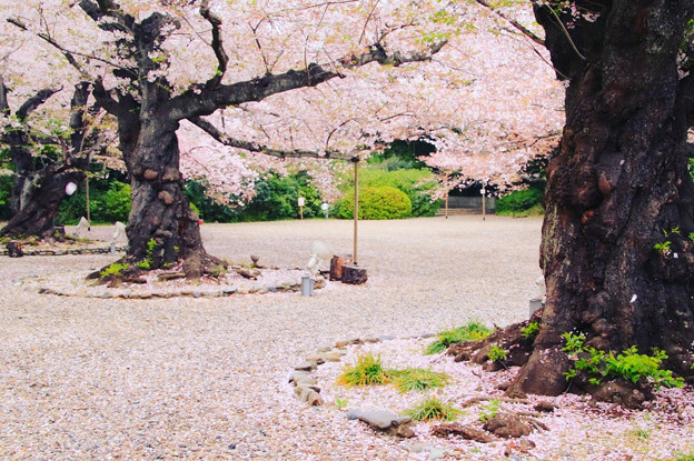 358 熊野神社 日立市