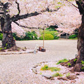 Photos: 熊野神社 日立市