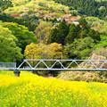 里川の菜の花 常陸太田