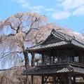 Photos: 阿弥陀寺の鐘楼 那珂市