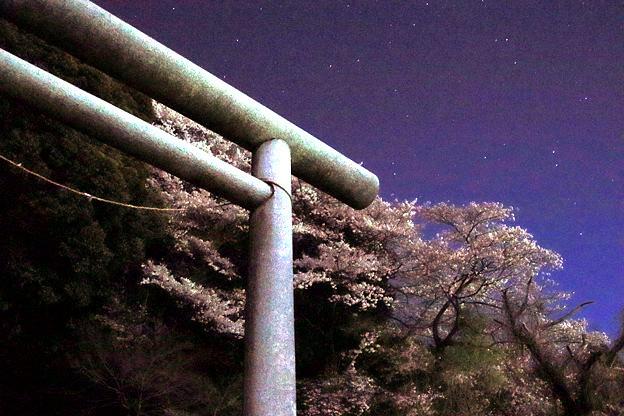 Photos: 339 星の宮 日立市