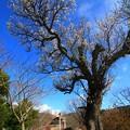 Photos: 405 きららの里 万葉の石庭