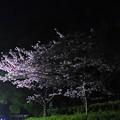 Photos: 319 本宮の保存林