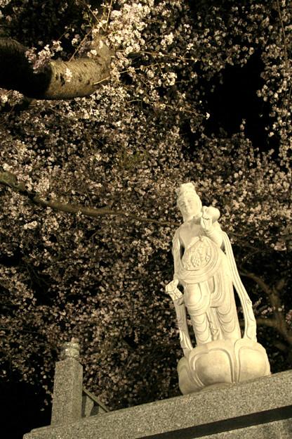 896 日輪寺の夜桜