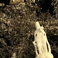 876 日輪寺の夜桜