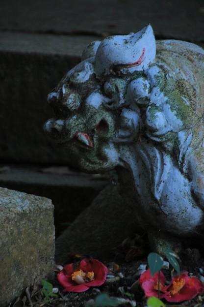 Photos: 922 釜坂八幡宮の狛犬
