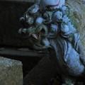 Photos: 926 釜坂八幡宮の狛犬