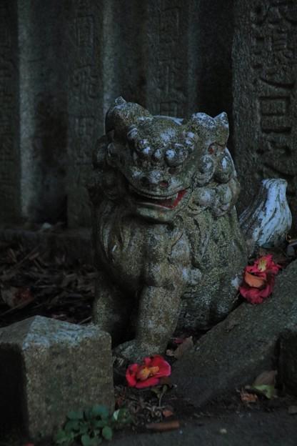 Photos: 921 釜坂八幡宮の狛犬