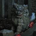 Photos: 925 釜坂八幡宮の狛犬