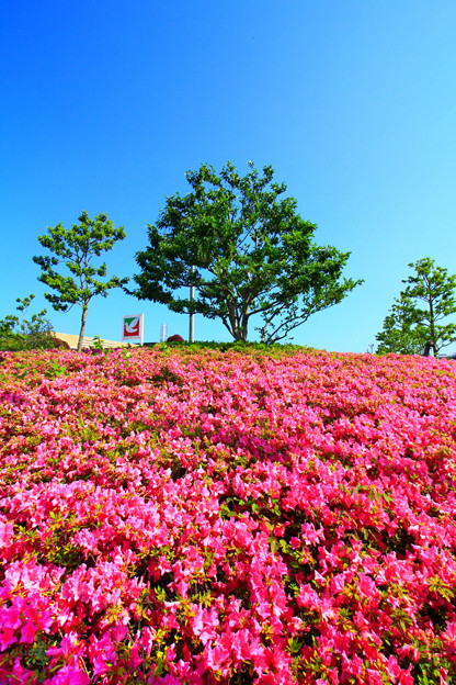 709 躑躅ヶ丘