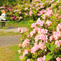 Photos: 727 ライフタウン鮎川台公園
