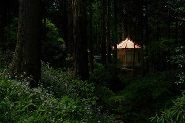 Photos: 445 御岩神社 大日堂