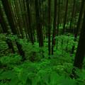 111 ブナの原生林 堅破山
