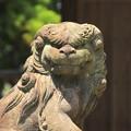 Photos: 229 折笠天満宮の狛犬