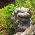Photos: 227 折笠天満宮の狛犬