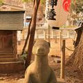 831 大久保鹿嶋神社の狛鹿