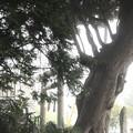 油縄子八幡神社の杜
