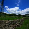 Photos: 594 中里の棚田