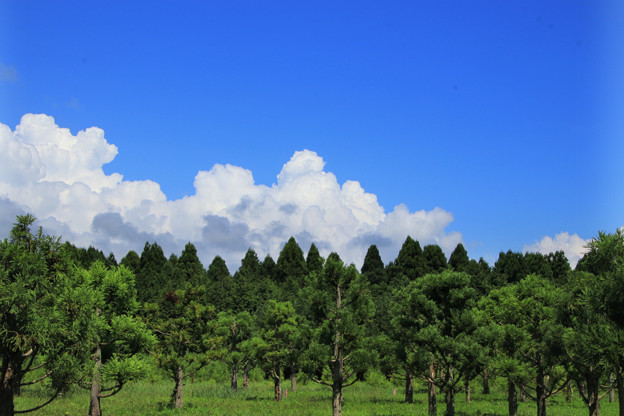 Photos: 151 森林総合研究所林木育種センター 日立市
