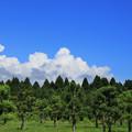 Photos: 151 森林総合研究所林木育種センター