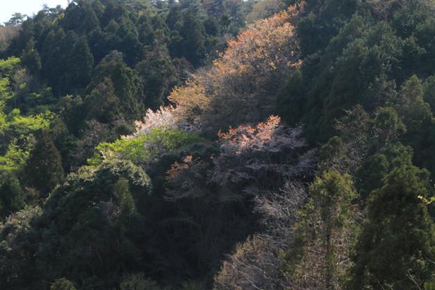 Photos: 346 鞍掛山