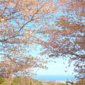 Photos: 283 田尻富士からの眺望