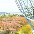 Photos: さくら宇宙公園