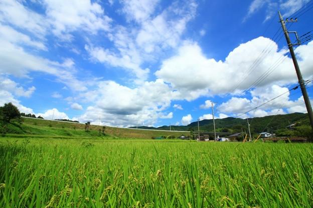 町屋の田園風景