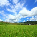 Photos: 町屋の田園風景