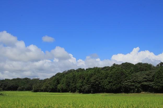 十王の田園風景