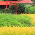 川尻の田園風景