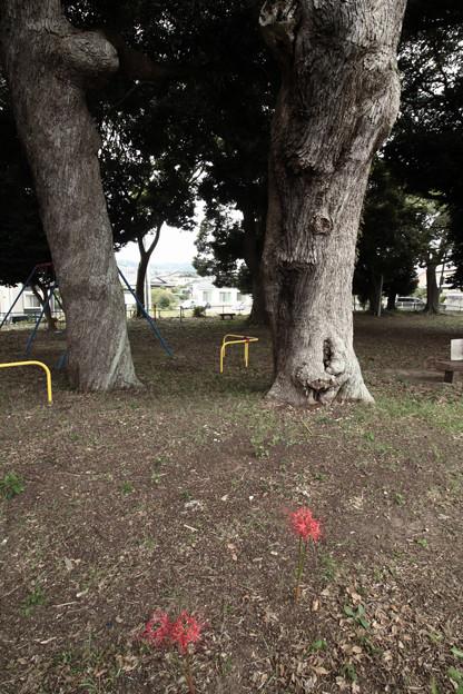 Photos: 870 諏訪森公園